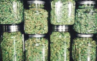 Illinois Adult Use Cannabis Program
