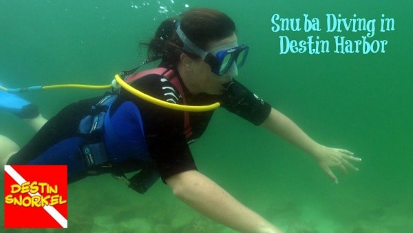 snuba diving in destin florida