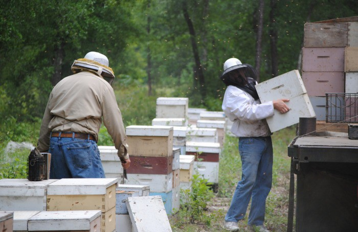 tupelo honey beekeeping