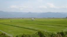 ChiangRai_41