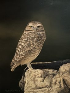 Oil of Burrowing Owl by artist Rob Macintosh