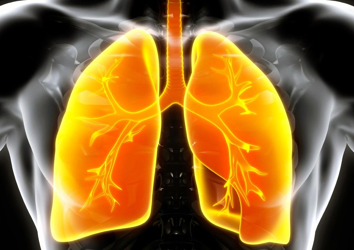 lungs - ХОБЛ не сдалась на милость энсифентрина