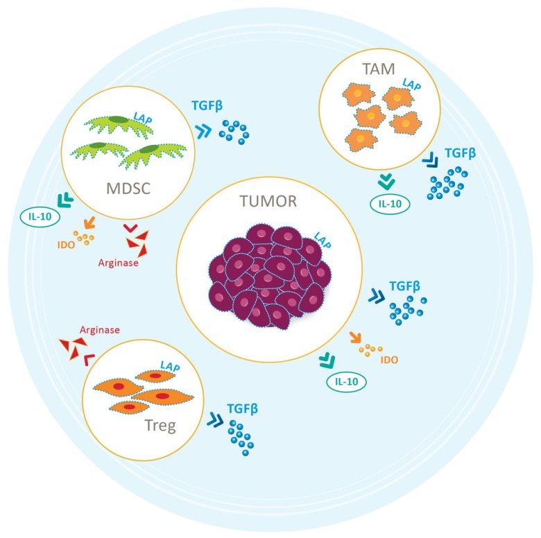 Merck & Co. займется перспективным модулированием иммунной системы