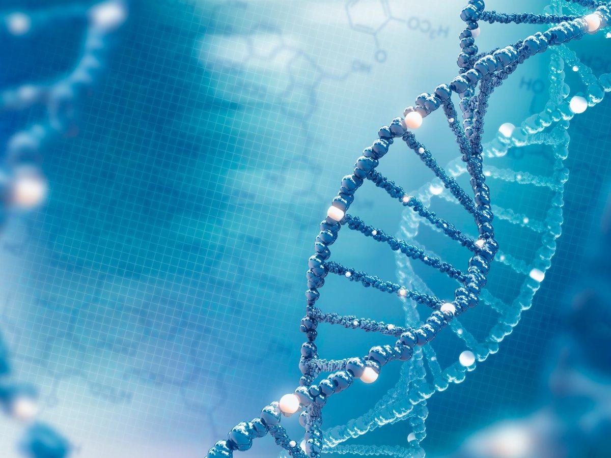 dna - Bилтоларсен: следующий препарат против мышечной дистрофии Дюшенна