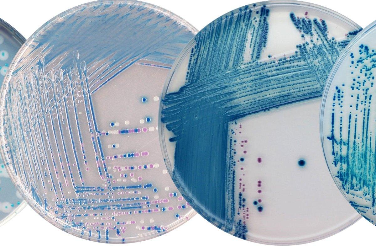 Антибиотику сулопенему крышка