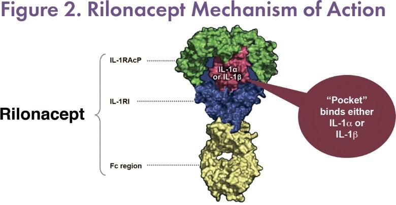 Рилонацепт: первое лекарство против хронического перикардита