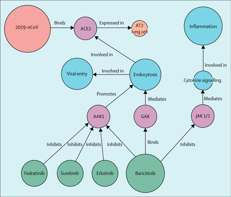 baricitinib covid 19 moa1 - Лечение коронавируса. Ремдесивир плюс барицитиниб — работающая комбинация против COVID-19
