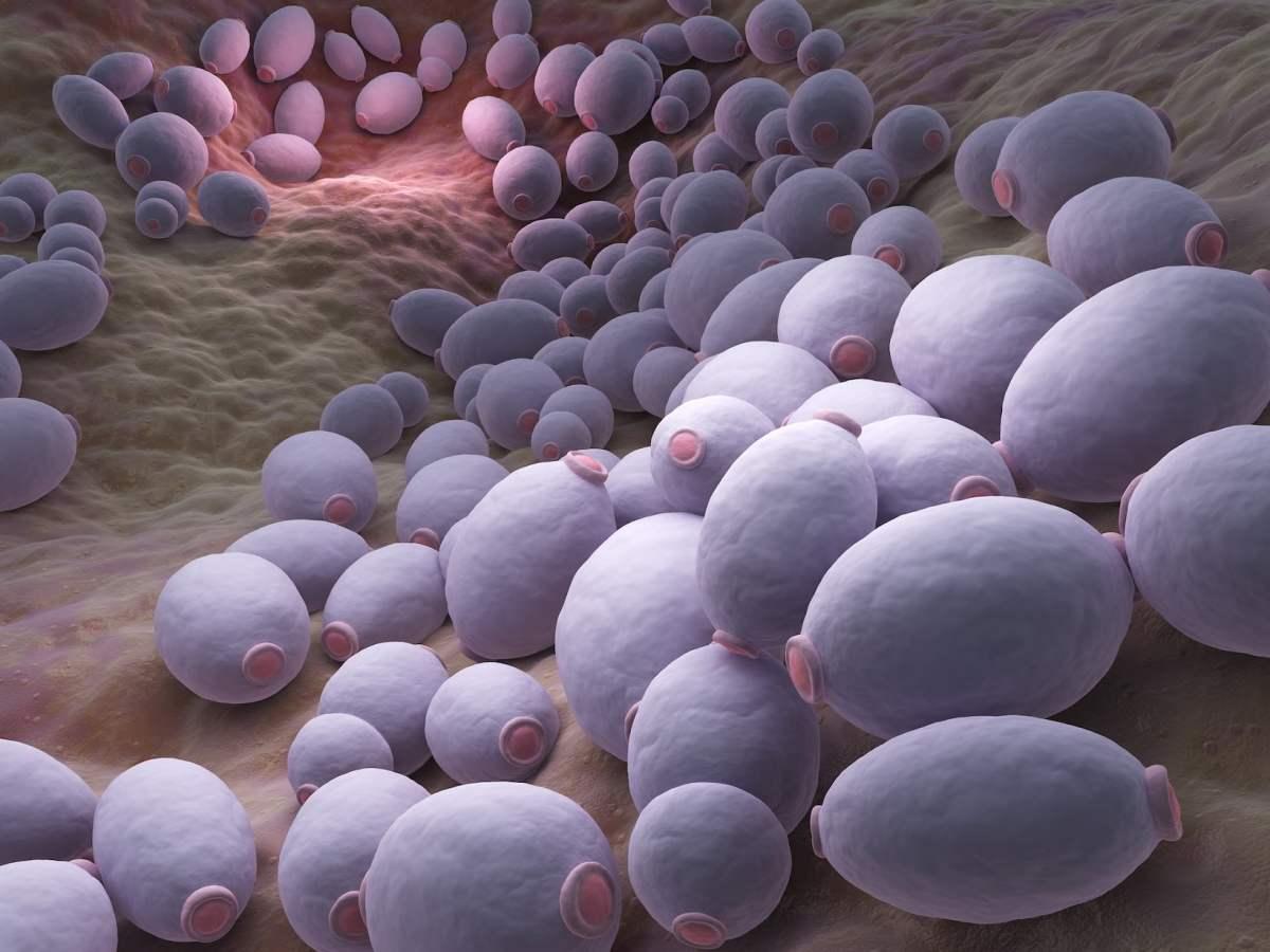 «Брексафем»: новое лекарство от вульвовагинального кандидоза
