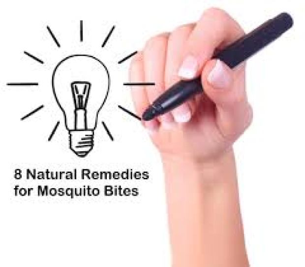 8 Natural Remedies for Mosquito Bites