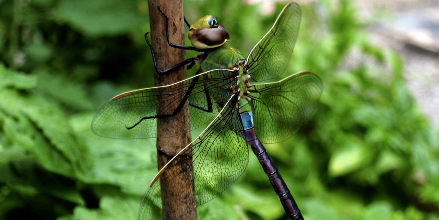 native plants are good for insects