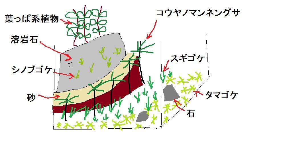 コウヤノマンネングサの並木道イメージ図