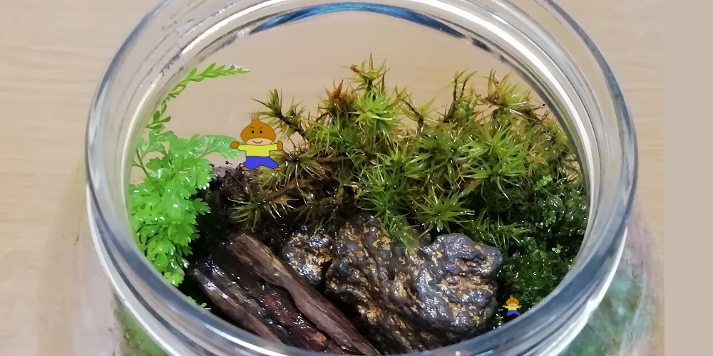 コケリウムのメンテナンスは長期間苔の状態をキープするために必要です