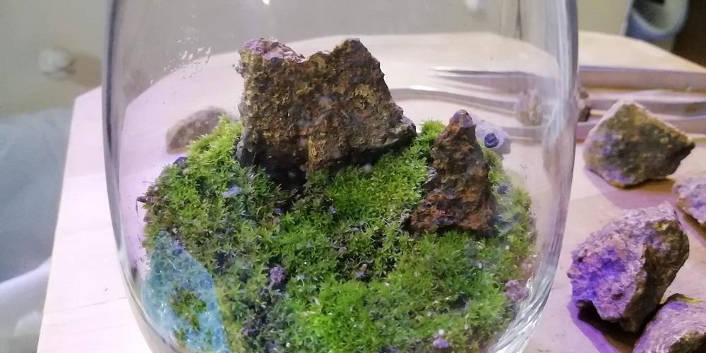 苔にピンセットで穴を開け石をねじ込む