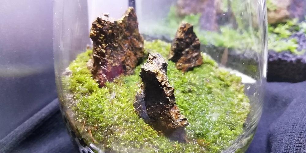 端の苔(ホソウリゴケ)で作るグラスコケリウム完成3