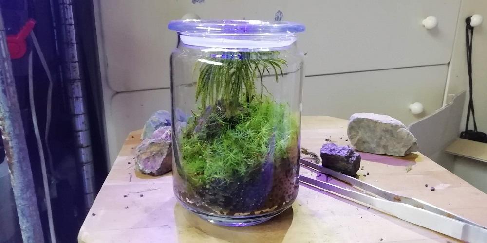 蓋をしたコウヤノマンネングサとタマゴケのグラス苔リウム