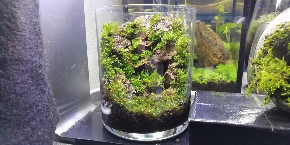 枯れ滝風ガラスコップ苔テラリウム 正面