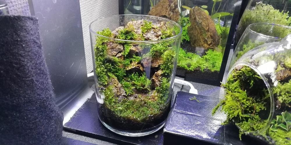 枯れ滝風ガラスコップ苔テラリウム ちょっと上から