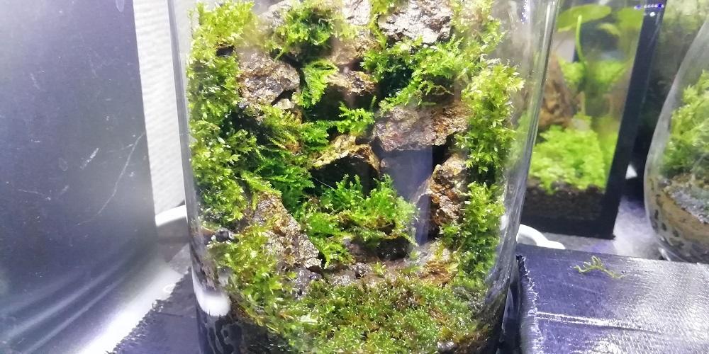 枯れ滝風ガラスコップ苔テラリウム アップで