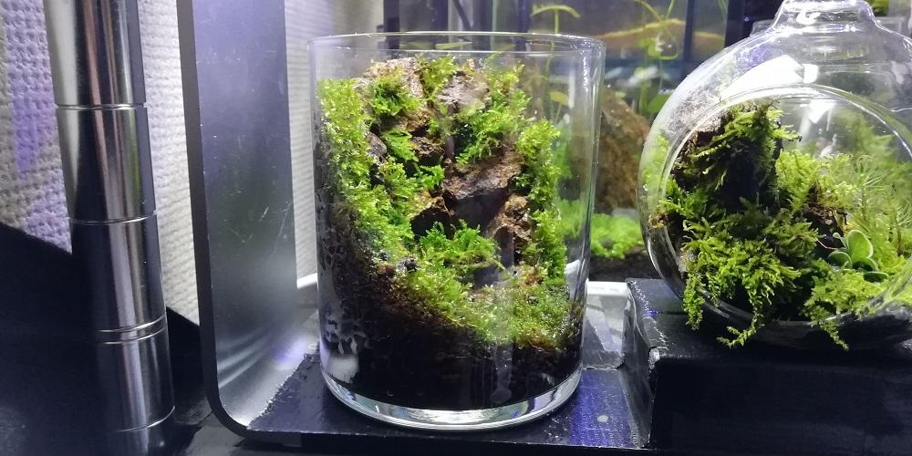 枯れ滝風ガラスコップ苔テラリウム 左から