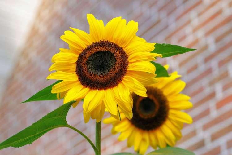 symmetry principle in flowers
