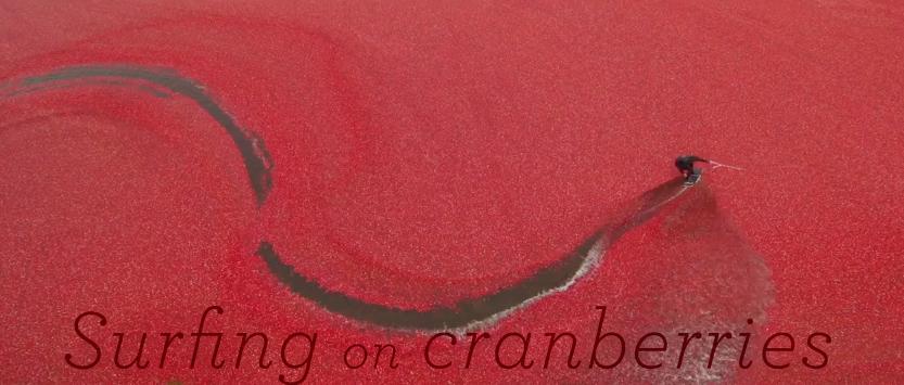 surfingOnCranberries