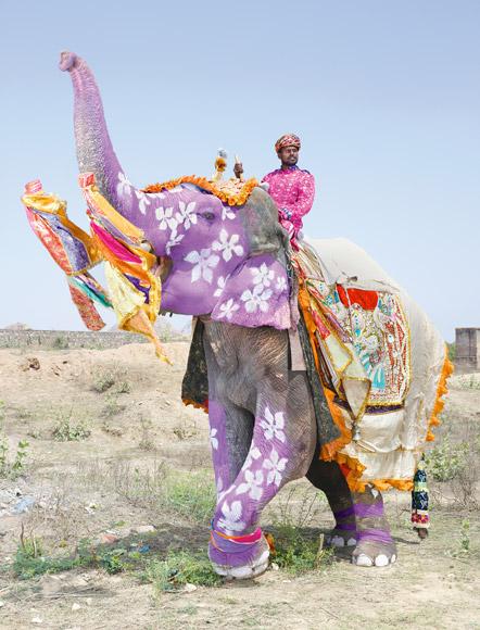 01-india-elephant-painted-purple-580v