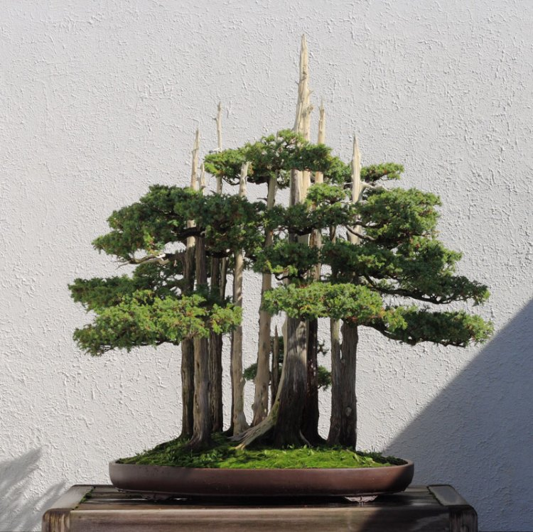 goshin-by-john-naka-bonsai-forest-for-grandchildren-5