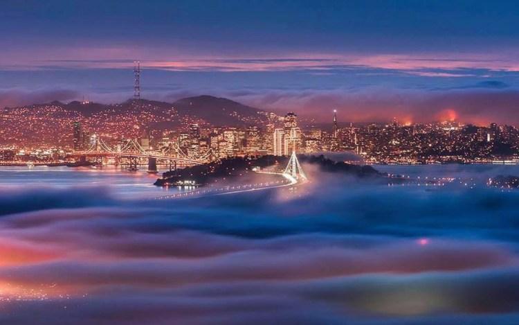 marin-fog-3-moss-and-fog