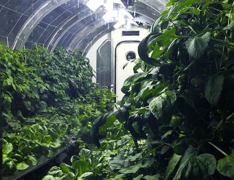 nasa-mars-greenhouse-moss and fog 5