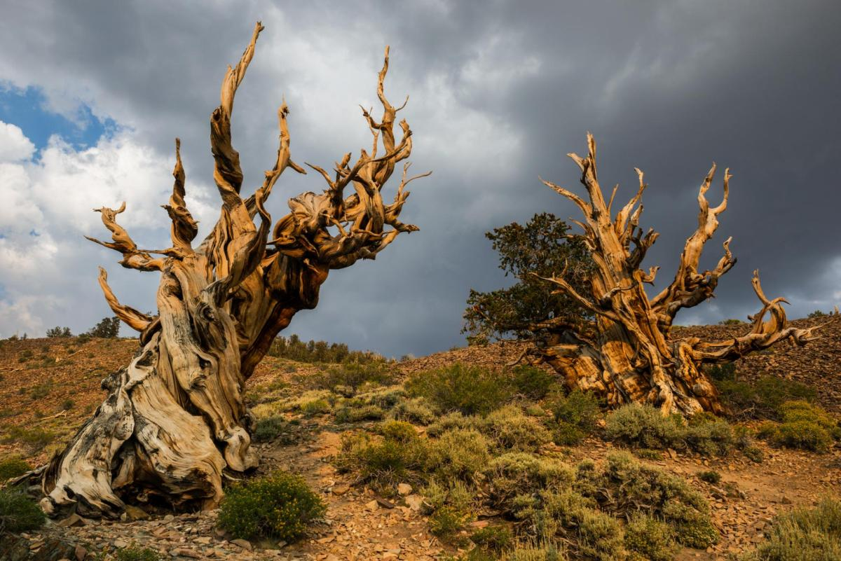 trees-outside-desert-tree.ngsversion.1487017086361.adapt.1900.1