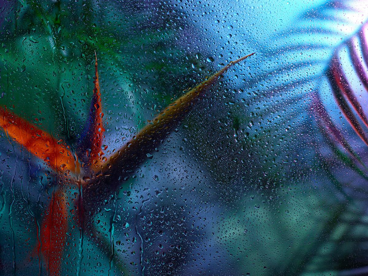 rainforest through glass moss and fog 1