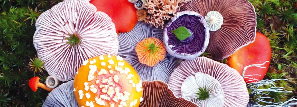 Wild Mushroom Menagerie