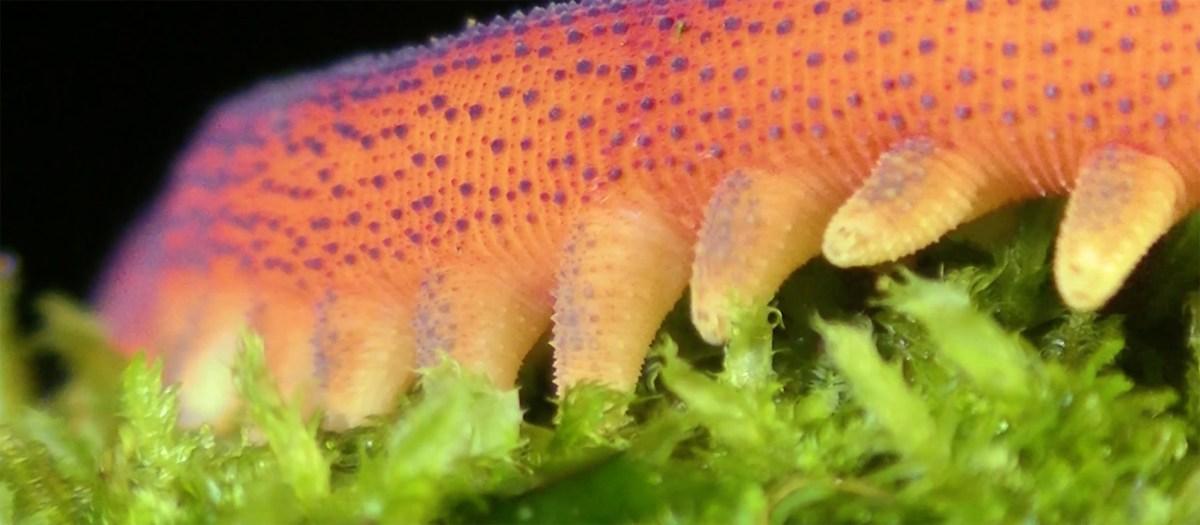 red velvet worm moss and fog 6