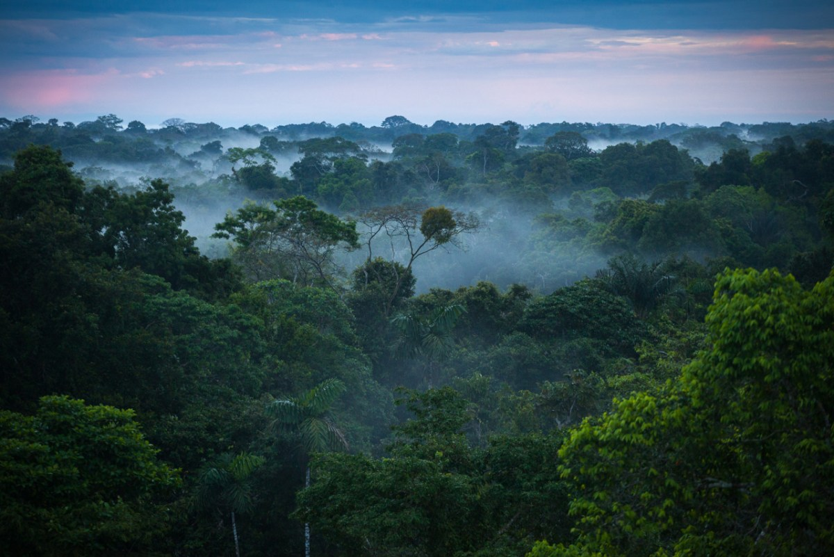 World's Largest Reforestation Project to Take Place in Brazil's Amazon