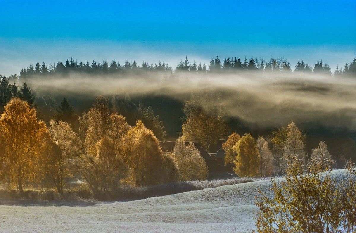 first-frost-moss-and-fog-2