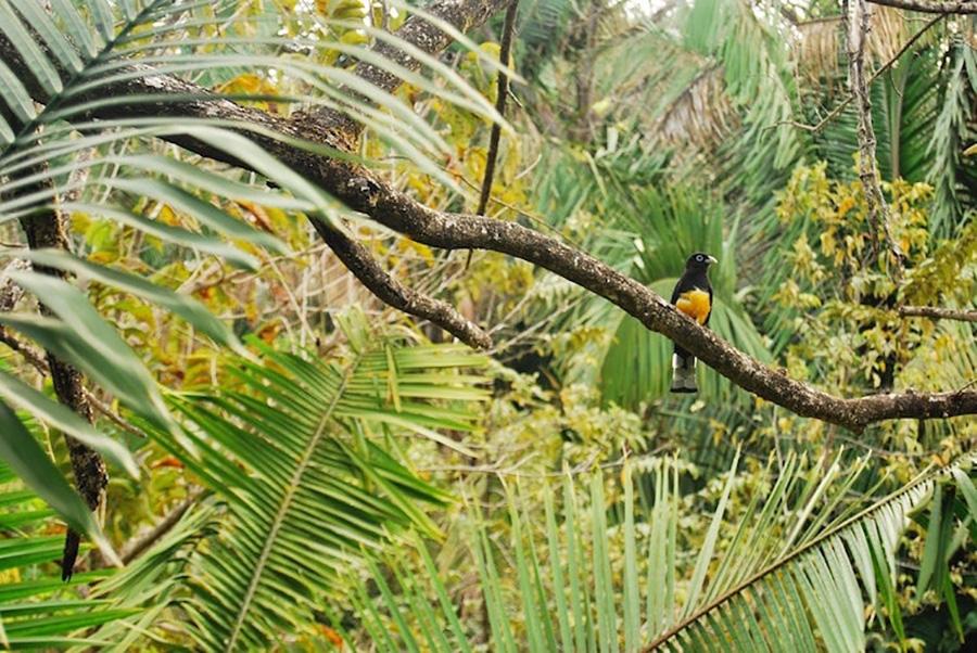 tropical-rainforest-1