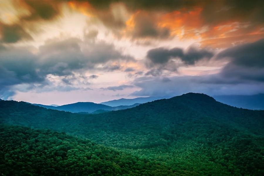 tropical-rainforest-3