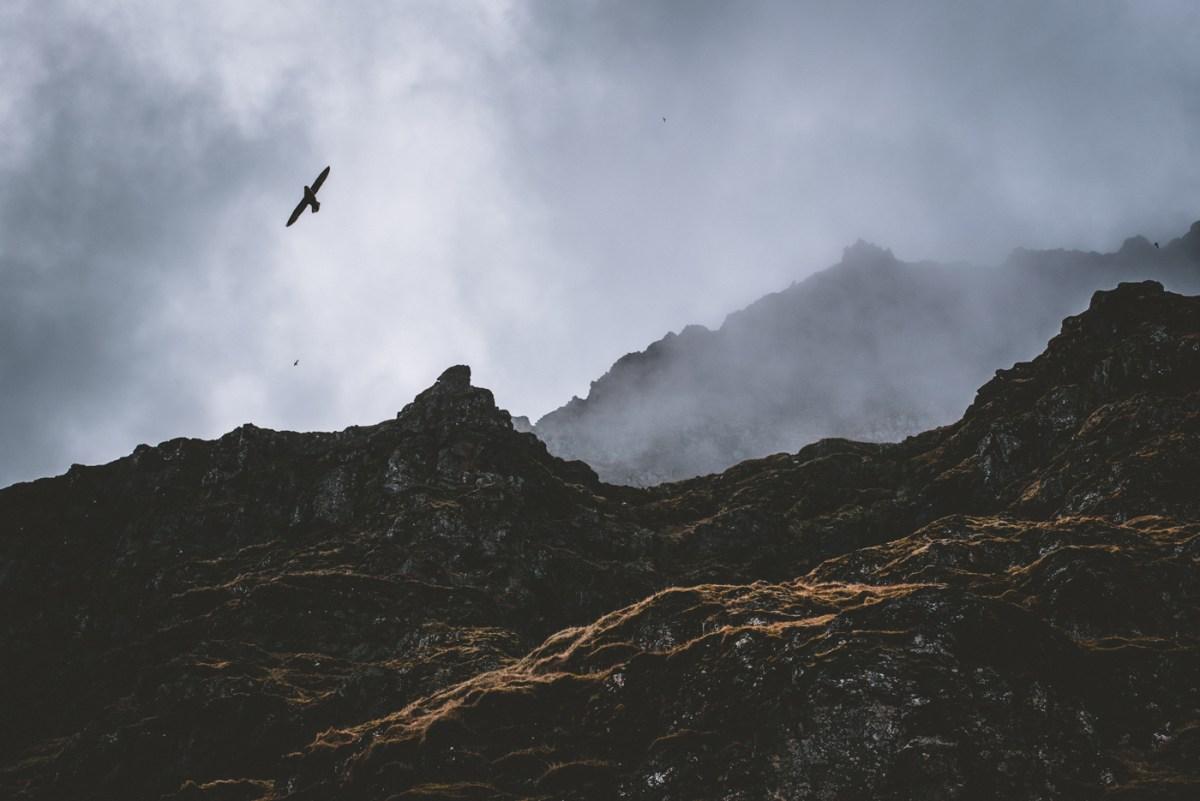 westfjords-iceland-moss-and-fog-13