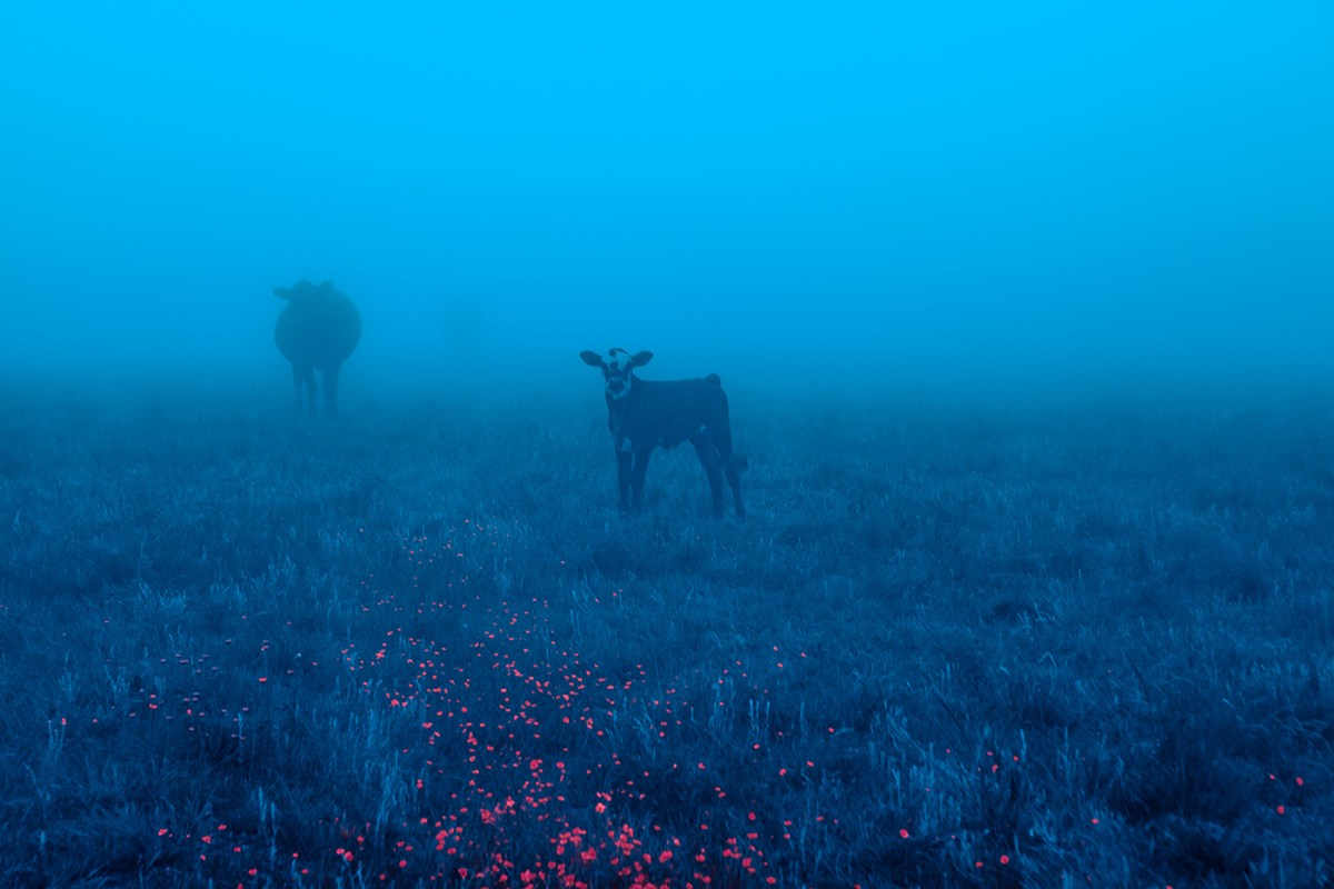 Morning-walks-south-africa-moss-and-fog-1