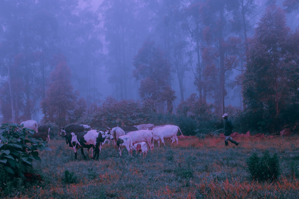 Morning-walks-south-africa-moss-and-fog-12