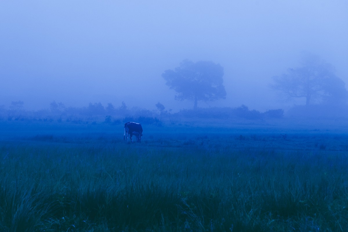 Morning-walks-south-africa-moss-and-fog-6