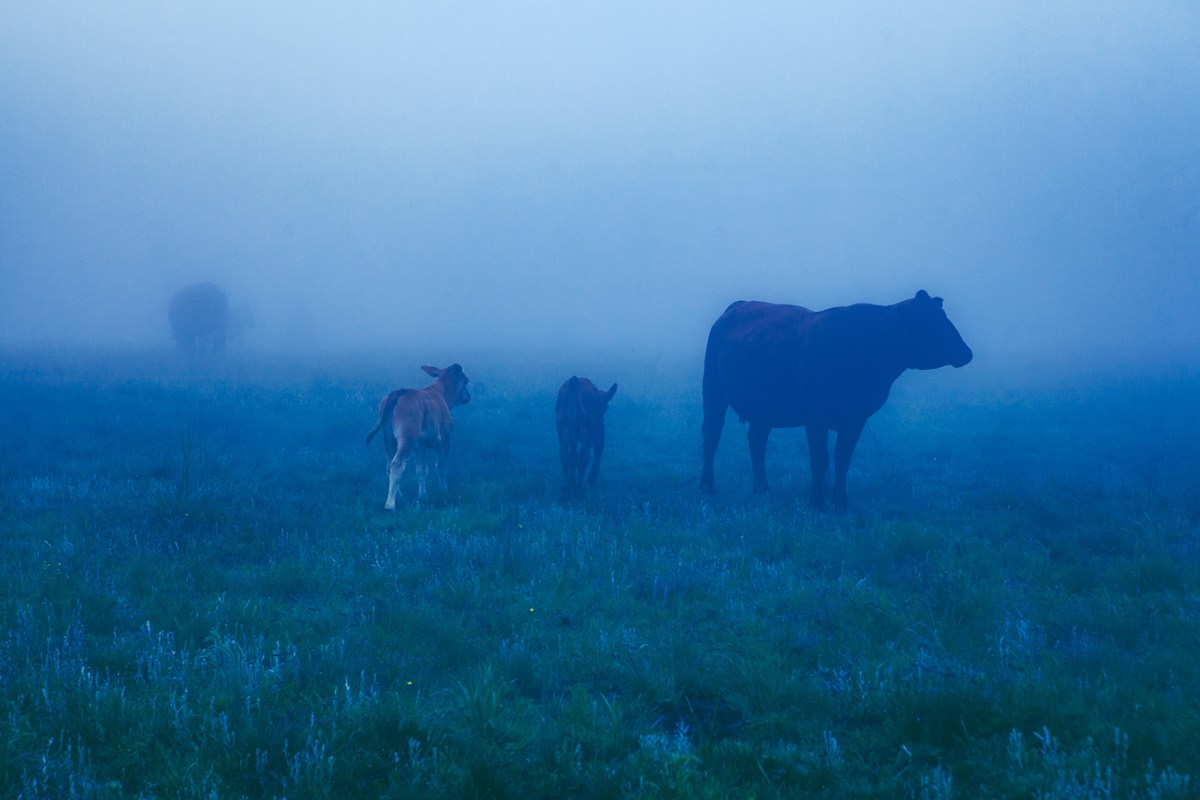 Morning-walks-south-africa-moss-and-fog-8