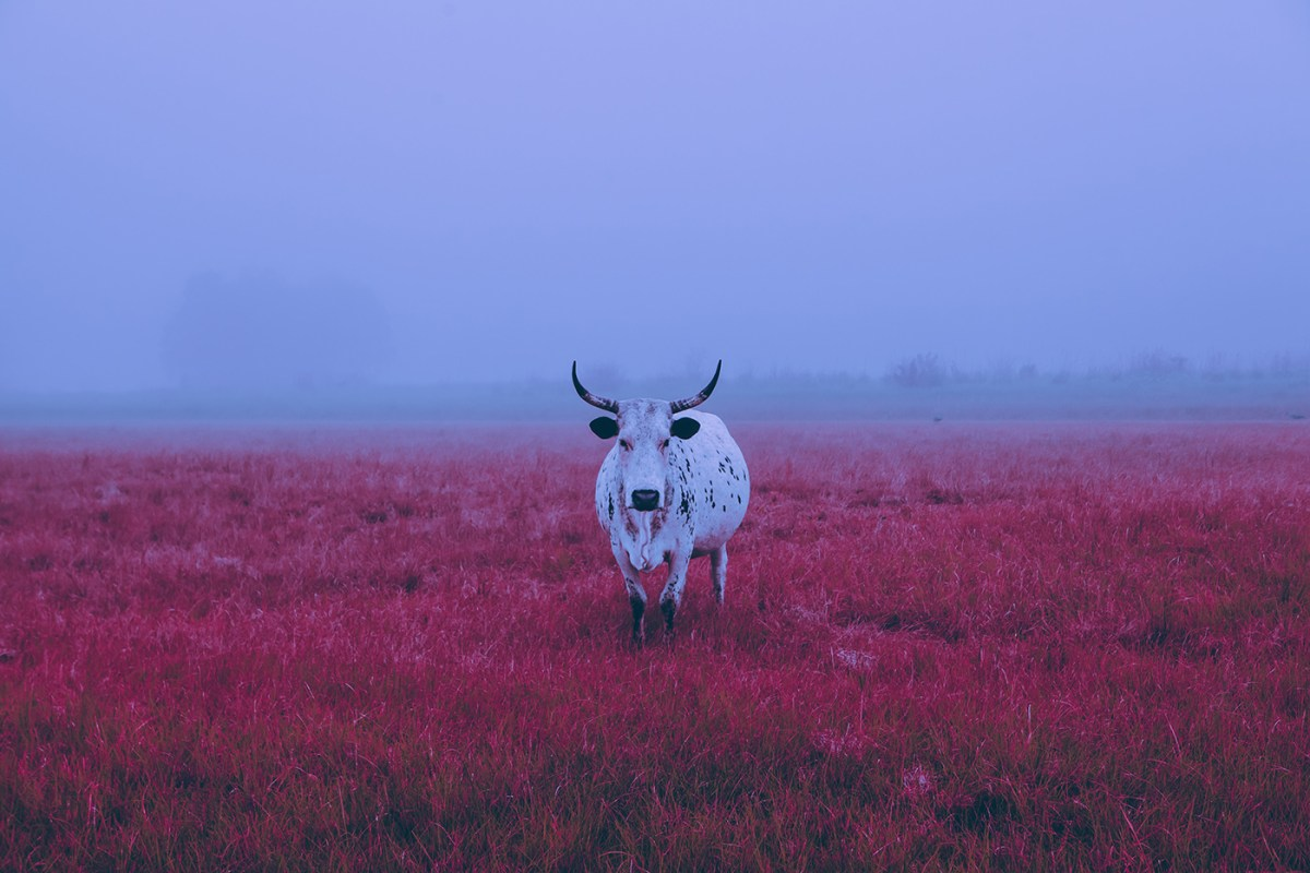 Morning-walks-south-africa-moss-and-fog-cover