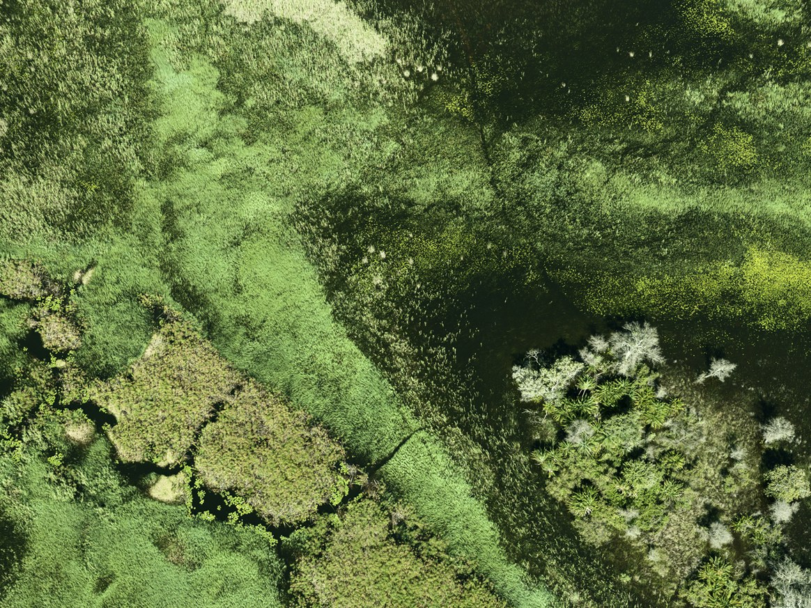aerial-africa-moss-and-fog-6