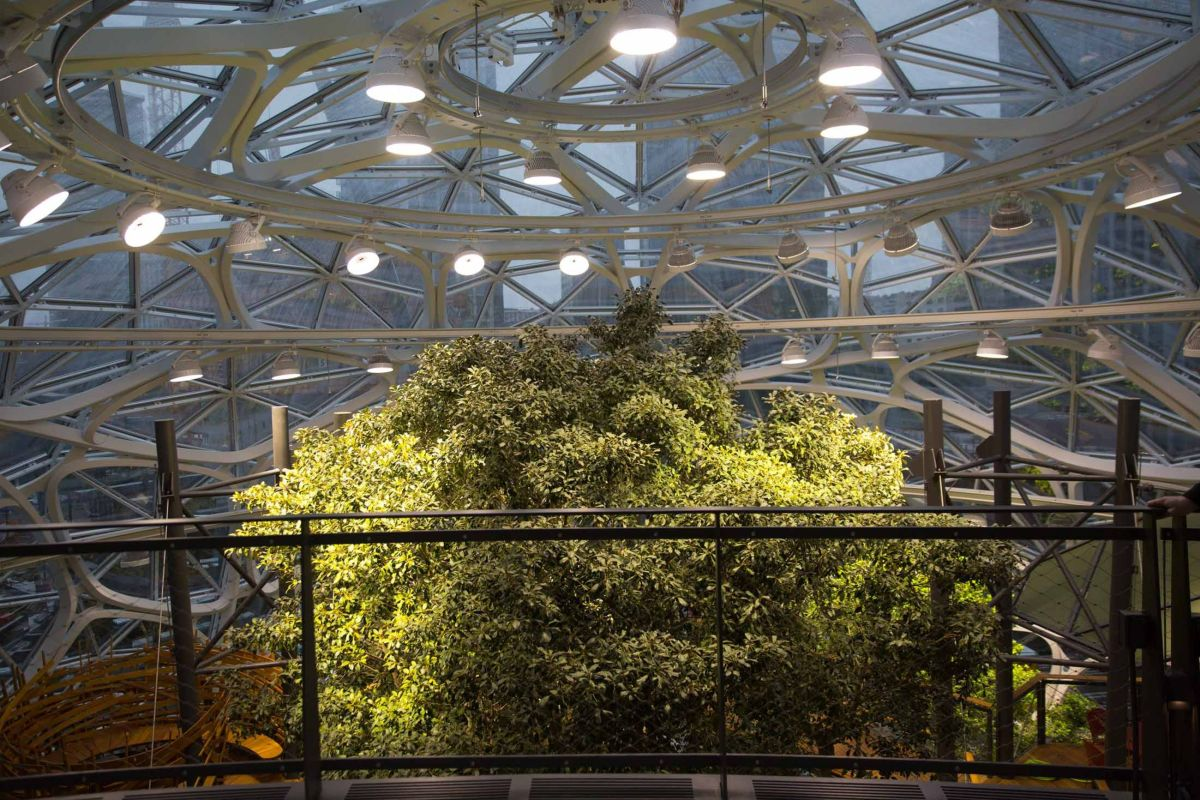 amazon-spheres-moss-and-fog-16