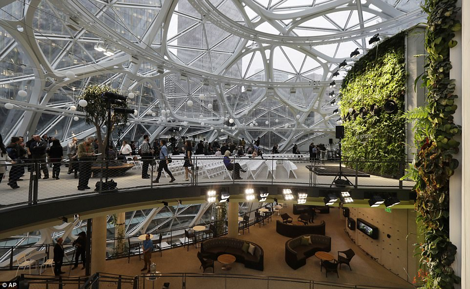amazon-spheres-moss-and-fog-5