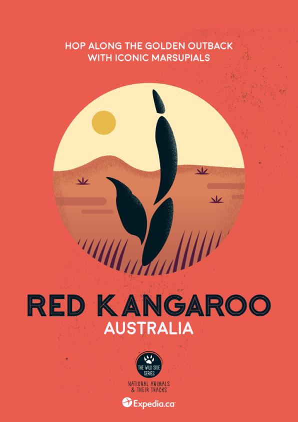 WildSideSeries__10_Kangaroo