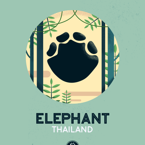 WildSideSeries__11_Elephant
