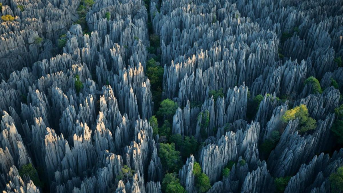 Madagascar's Stone Forest