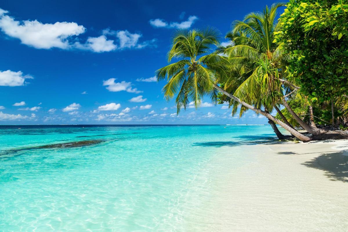 Maldives beach with palm tree